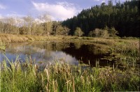 Big River Pond in Mendocino photo gallery