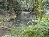 Little North Fork Bridge in JDSF/Mendo Woodlands photo gallery