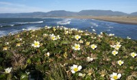 Mouth of the Garcia in Southern Mendocino Coast photo gallery