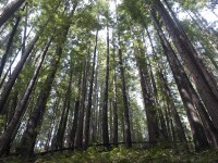 Surrounding Forest in Central Mendocino Coast photo gallery