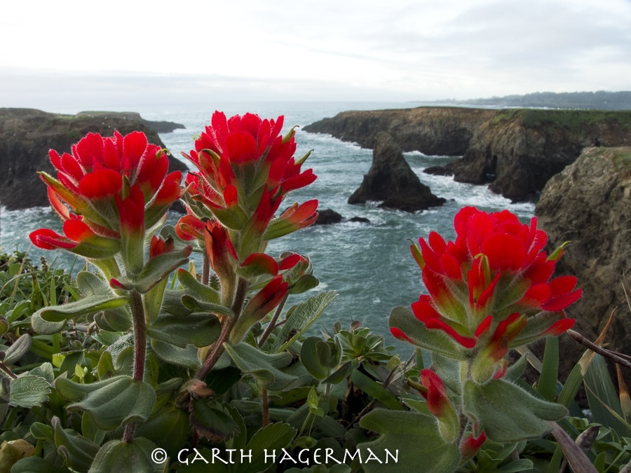 Paintbrush Cliffs in Mendocino photo gallery