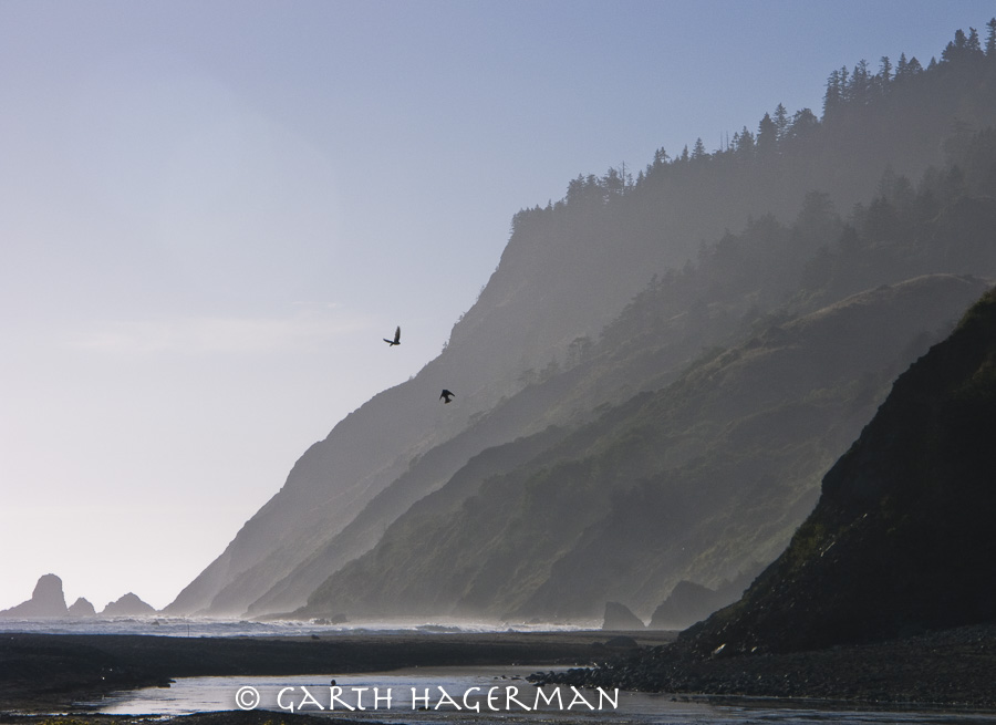 Usal Beach Ravens in Lost Coast photo gallery