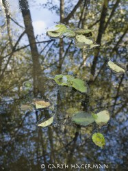Alder Puddle in reflections photo gallery