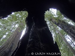 Double Arch in Redwood National and State Parks photo gallery
