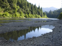 Eel Flood Plain in Humboldt Redwoods photo gallery