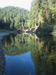 Eel Reflections in creeks and rivers photo gallery