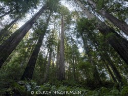 Glenn Watters Grove in JDSF/Mendo Woodlands photo gallery