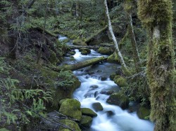 Grasshopper Peak Creek in creeks and rivers photo gallery