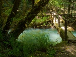 Green Glow in creeks and rivers photo gallery