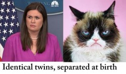 Identical Twins in humor photo gallery