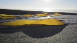 Kelp Scape in abstract photo gallery