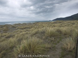 McNutt Gulch Beachgrass in Lost Coast photo gallery