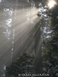 Moment of Inspiration in Redwood National and State Parks photo gallery