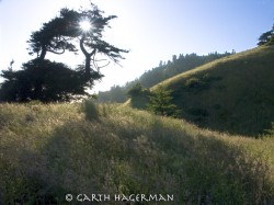 Osprey Tree in Lost Coast photo gallery