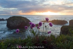 Pom Poms in Mendocino photo gallery