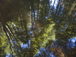 Reflected Forest in creeks and rivers photo gallery