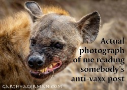 vax hyena in wildlife photo gallery