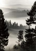 Morning Fog in black and white photo gallery