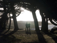 Cypress Couple in Mendocino photo gallery