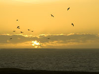 Gulls at Sunset in Mendocino photo gallery